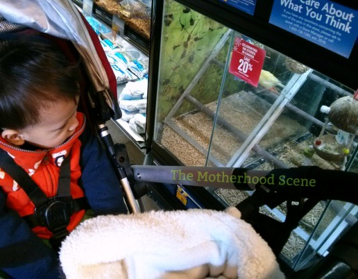 A boy watches birds at a pet store